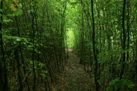 Waldlabyrinth
